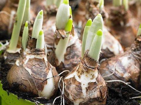 家中观赏的花草,也是一味可以治病的中药,外用可解毒消肿!