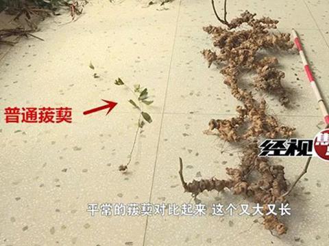 """湖南现长达两米野生中医药材""""金刚藤"""",预估年龄百年以上"""