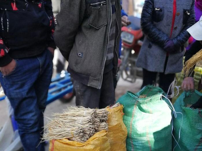 【陇西白条党参】种苗产新季,菜子镇种苗交易市场随访