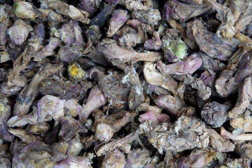 聚焦:高价过后的甘肃品种