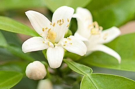 4月需求用季 花茶类行情概述