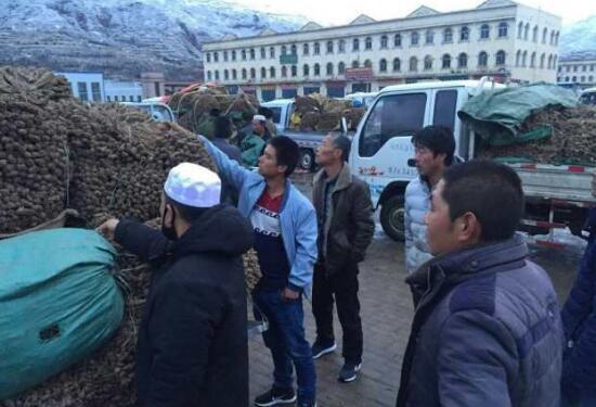 4月13日岷县市场当归、黄芪、党参价格快讯