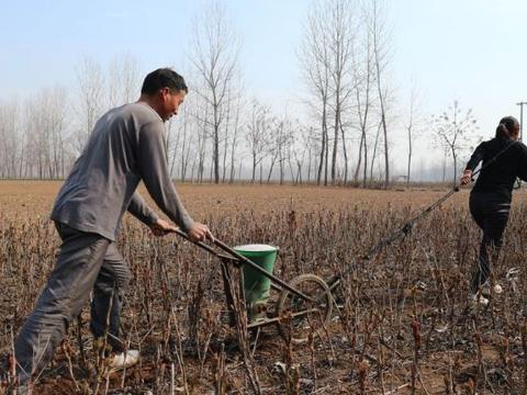 这种中药材赚钱很少,许多农民特别喜欢种植,为什么?