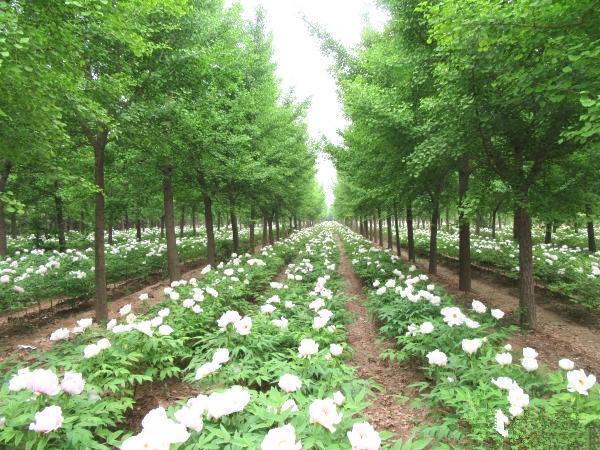 林业补助有哪些?林下食用菌、药材项目申报要求及栽培规范是什么