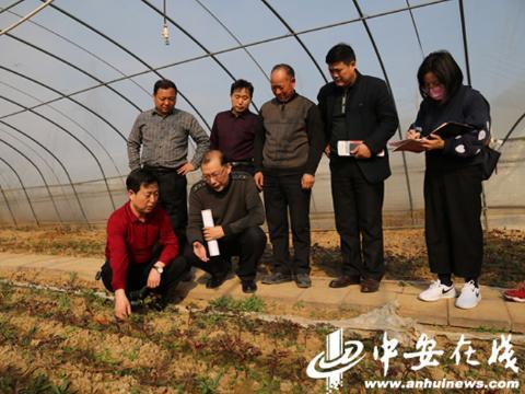 安徽省质监局:质量兴农 助力安徽乡村振兴