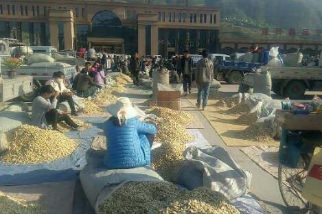 5月16日岷县市场当归、黄芪、党参价格快讯