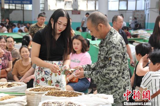 探访河北安国中药材市场:治理持续 采购商叫好