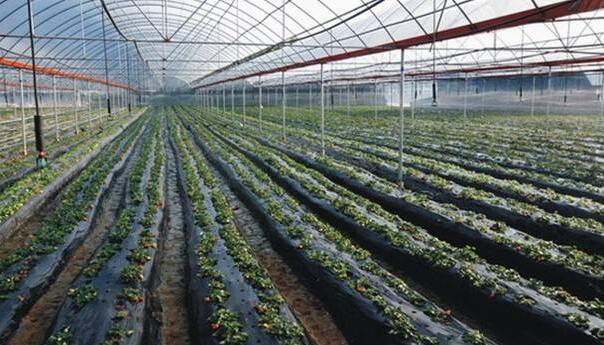 农业部:加快推进贫困山区中药材标准化种植