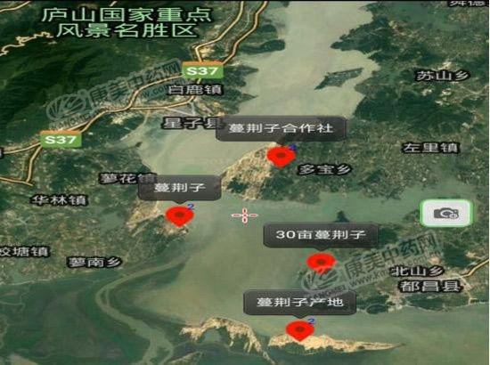 主产区是九江的都昌,星子,永修等县,赣江边上的丰城市也有部分蔓荆子.