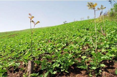 山区种植药材缺乏哪些问题?