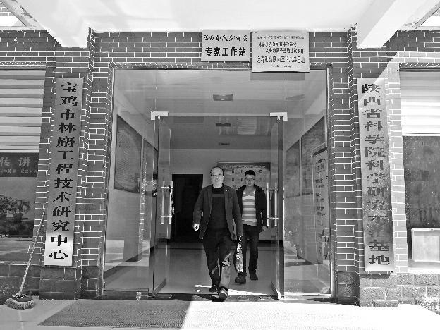 软黄金铺就黄金道——凤县争创麝香国家地理标志保护产品调查
