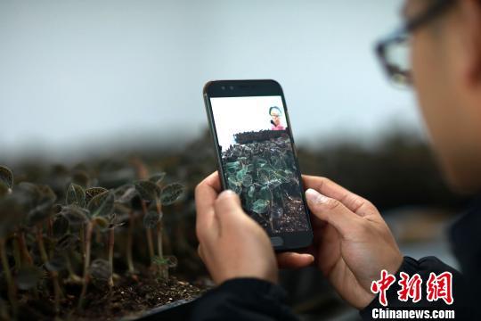 """贵州""""95后""""大学生不考公务员 回乡创业发展种植业"""