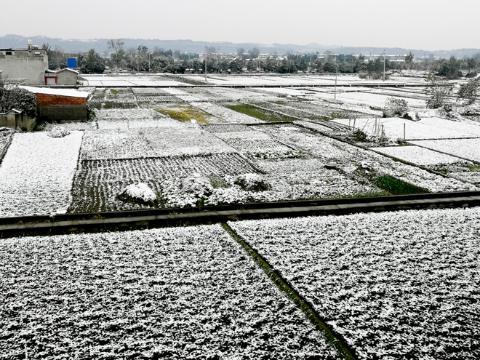 四川十年不遇的大雪,对在地的川芎、麦冬是好还是坏?