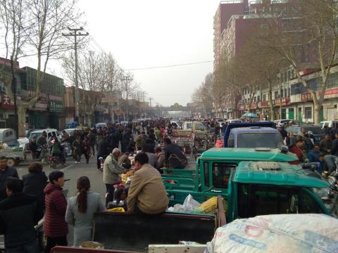 春耕时节话种植-安国籽种市场报道(四)