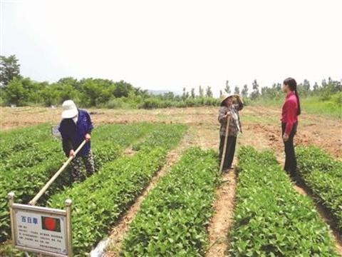 国家统计局发布《健康产业统计分类(2019)》 中药材种植、养殖和采集作为大类之一被纳入