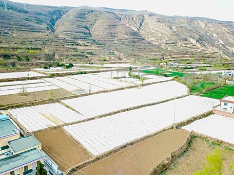 甘肃清水县:半夏亩产收益好 药农种植热情高