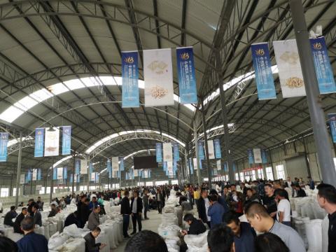 甘肃首阳:中药材初加工市场近期行情