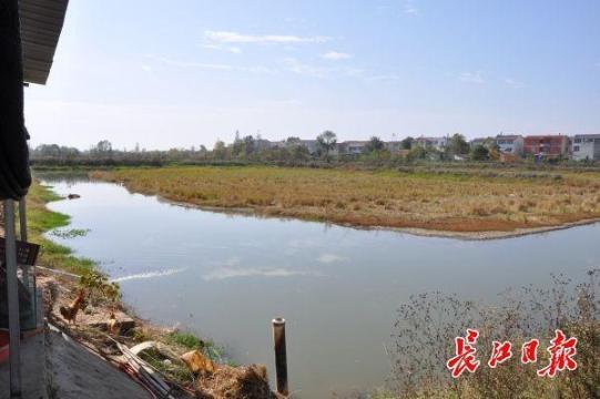"""武汉这个村养虾种菊花,村民""""现在每年可以多拿四五千元"""""""