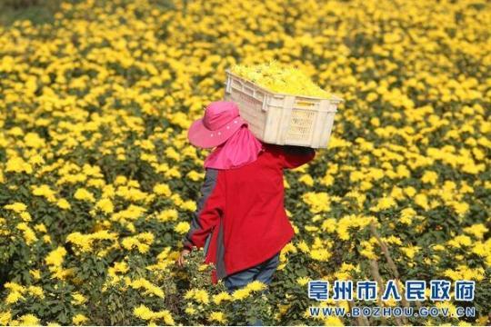 蒙城:特色种植助农增收