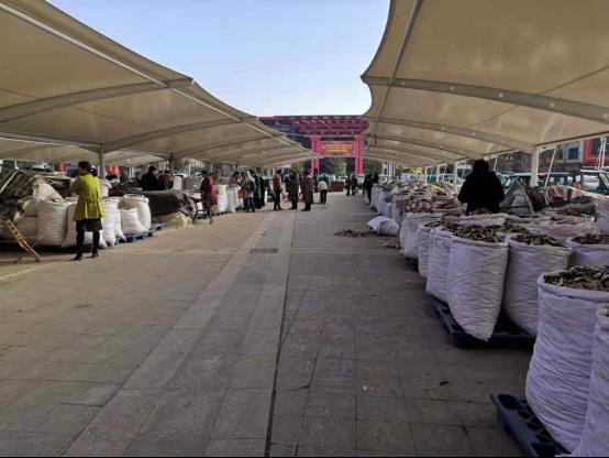 亳州探访:白术大量产新,后市行情将陷入低谷