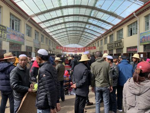 青海果洛州雪域市场:冬虫夏草鲜草上市,交易繁忙