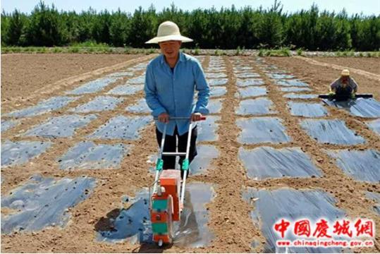 庆城县积极开展中药材育苗新技术示范与研究