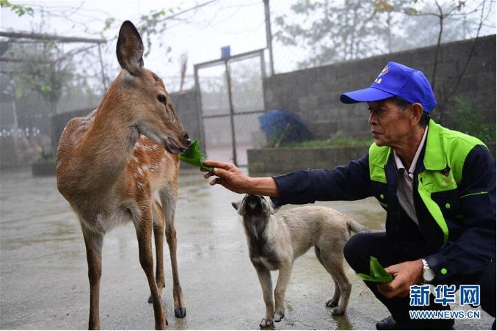 贵州绥阳:梅花鹿养殖业带动群众致富