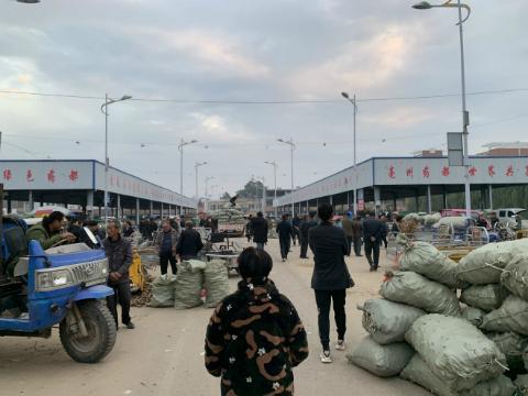 亳州五马镇:集市中药材交易进入旺季