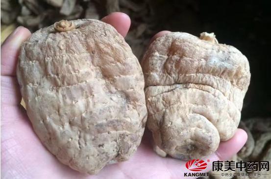 云南省昭通市天麻快讯