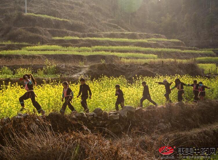 农村田埂坎上的十大常见草药(图)