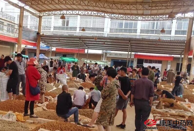 5月22日文山三七市场 行情保持稳定