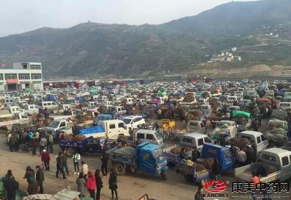 5月27日岷县市场 当归、黄芪兴发娱乐场略有疲软