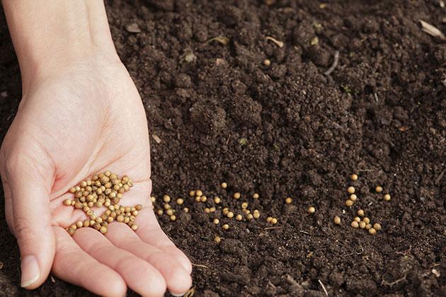 安国籽种市场 商家多关注种植