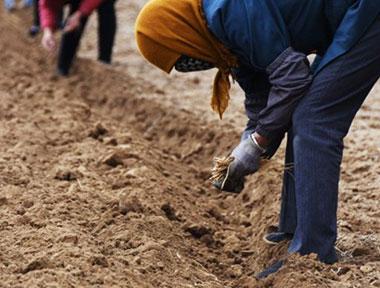 甘肃省出台支持陇药产业发展政策措施